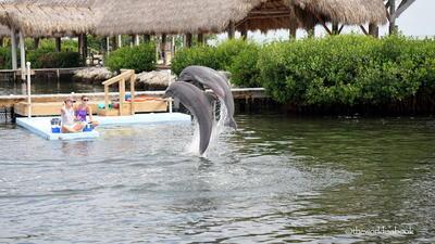 Delfin Kutatóközpont