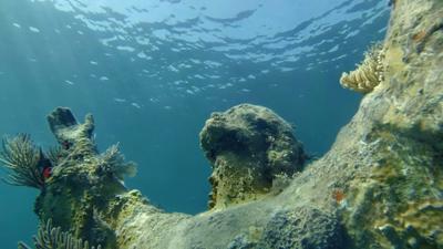 John Pennekamp Coral Reef Állami Park, Key Largo