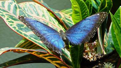 Key West Pillangó és Természeti Konzervatórium